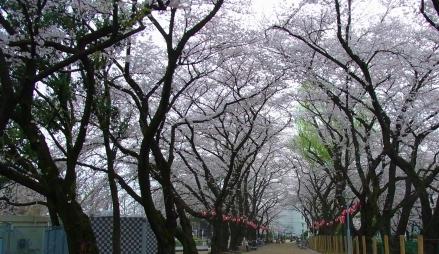 パパ活 東京都練馬区